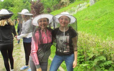 Čebelarski dan